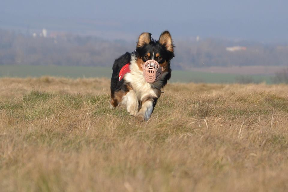 A coursing2